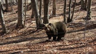 Νέο τροχαίο με αρκούδα στην περιοχή Κλειδί στο Αμύνταιο (pics)