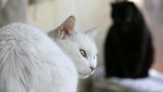 Αυστραλία: Οι γάτες σκοτώνουν καθημερινά περισσότερα από ένα εκατομμύριο πουλιά