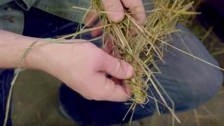 Κατασκεύασε ανθεκτικό σχοινί από γρασίδι (vid)