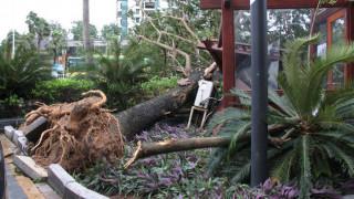 Σε κυκλώνα μετατράπηκε η φονική καταιγίδα Νέιτ – Κατευθύνεται προς τις ΗΠΑ