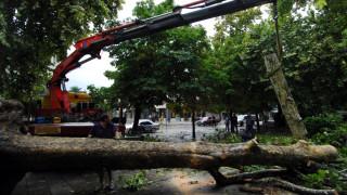 Θεσσαλονίκη: Προβλήματα στην ηλεκτροδότηση λόγω πτώσης δένδρου