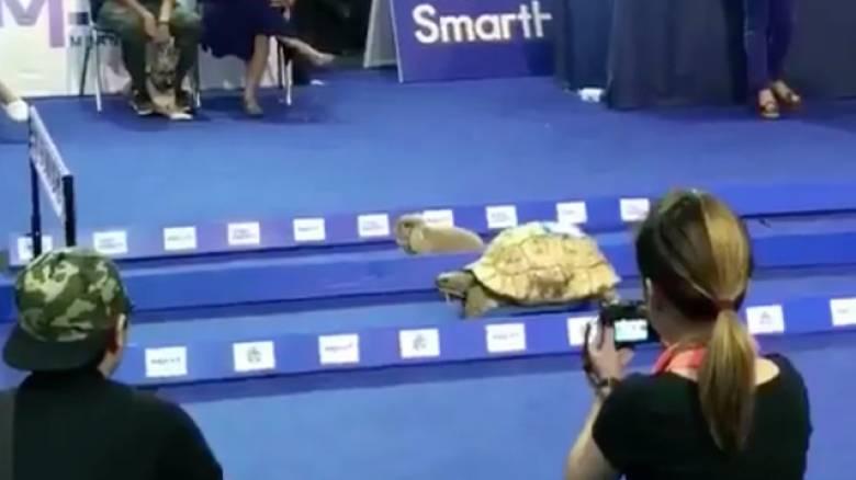 Η χελώνα κέρδισε τον λαγό και δεν είναι παραμύθι (vid)