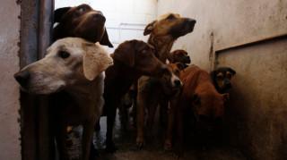 Ιράκ: Στη Βαγδάτη τα αδέσποτα ζώα βρίσκουν σπίτι χάρη στους ιστότοπους κοινωνικής δικτύωσης