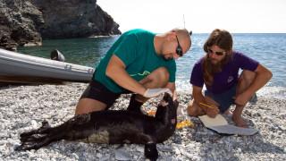 MOm: Παγκόσμια διάκριση για τον «φύλακα» της Μεσογειακής φώκιας στην Ελλάδα