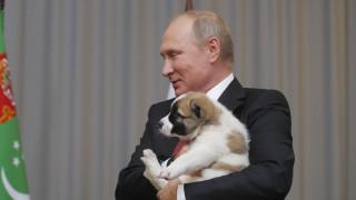 Ο νέος χνουδωτός φίλος του Πούτιν ακούει στο όνομα Βέρνι (pics&vid)