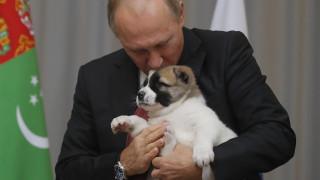Ο Βέρνι και... όλοι οι σκύλοι του προέδρου