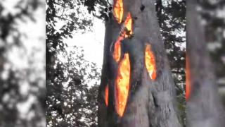 Το δέντρο που καιγόταν από μέσα