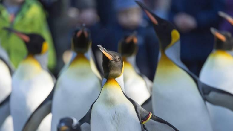 Χιλιάδες νεοσσοί πιγκουίνοι Adelie πεθαίνουν στην Ανταρκτική