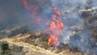 Ολονύχτια μάχη με τις φλόγες στην Εύβοια - Φωτιά και στον Άραξο (pics)