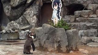 Ο πιγκουίνος που ερωτεύτηκε χαρακτήρα anime πέθανε δίπλα στην αγαπημένη του (pics)