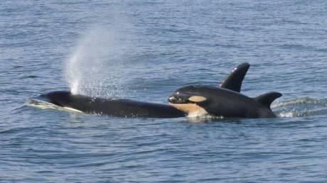 Τα καλύτερα μέρη στον κόσμο για να δείτε τις πιο όμορφες φάλαινες