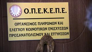ΟΠΕΚΕΠΕ: Σε πόσες δόσεις θα δοθούν οι επιδοτήσεις για το ελαιόλαδο