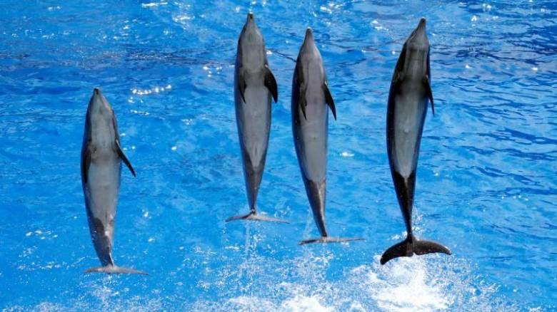 Φάλαινες και δελφίνια ζουν σε κοινωνίες, μιλούν τοπικές διαλέκτους και... κουτσομπολεύουν