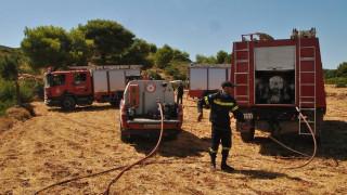 Λάρισα: Φωτιά κατέστεψε ολοσχερώς ποιμνιοστάσιο