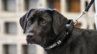Η CIA «απέλυσε» σκύλο της γιατί... δεν περνούσε καλά (pics)