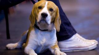 Πότε και γιατί ο σκύλος μας επιλέγει να μας κοιτάξει με το ακαταμάχητο βλέμμα του