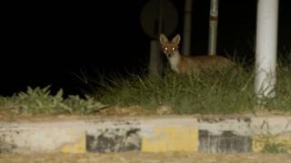 Μια αλεπού σε... σχολείο στις Σέρρες (vid)