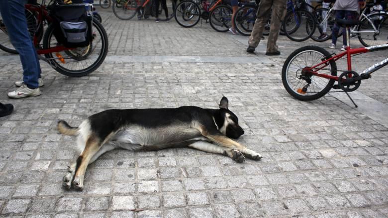Κρήτη: Πυροβόλησε σκύλο έξω από σχολείο, λίγο πριν σχολάσουν οι μαθητές