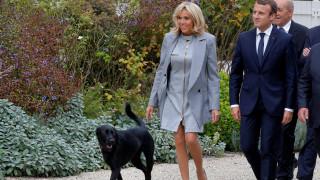 Ο ασυγκράτητος σκύλος του Μακρόν έκανε την ανάγκη του στο τζάκι του Ελιζέ