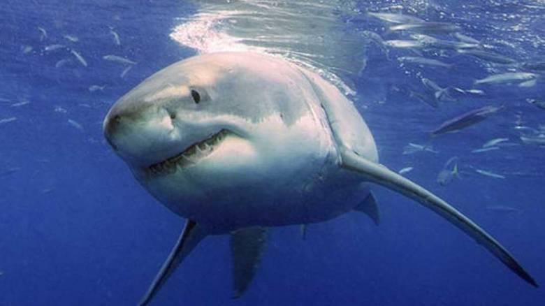 Αυστραλία: Καρχαρίας επιτέθηκε σε 15χρονη - Συγκλονίζει η περιγραφή του πατέρα της (vid)