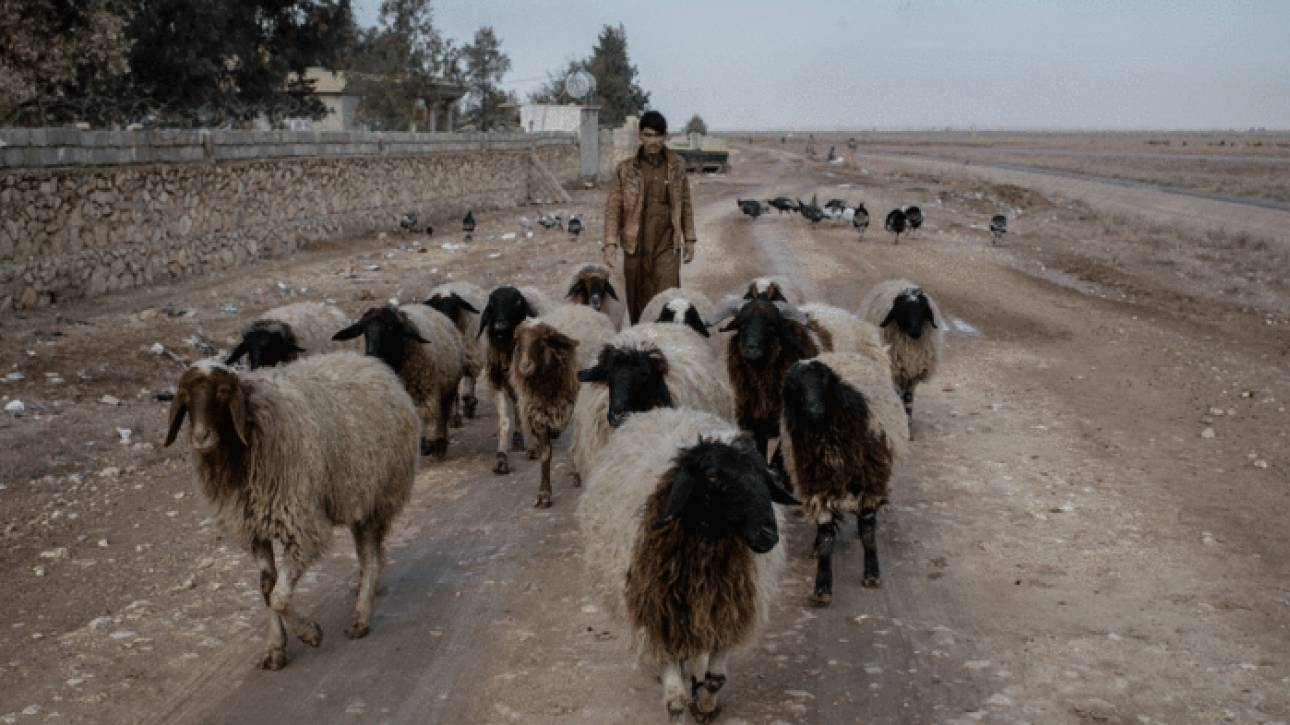 Μαζικοί εμβολιασμοί ζώων στη Μοσούλη για την αποτροπή μετάδοσης ασθενειών