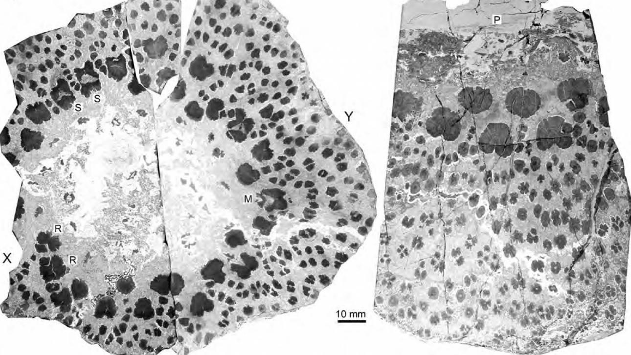 Απολιθώματα αποκαλύπτουν τα μυστικά των αρχαιότερων δέντρων στη Γη