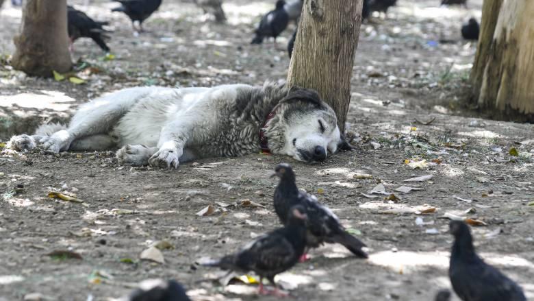 Φρίκη προκαλεί περιστατικό κακοποίησης σκύλου στην Αχαΐα