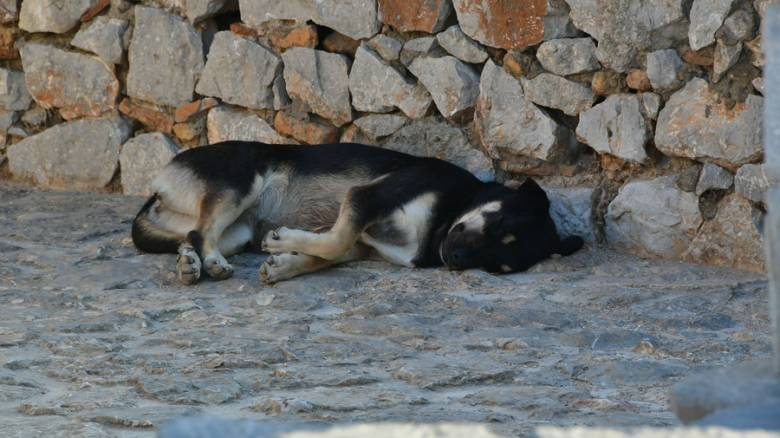 Αθώος ο οδηγός που έσερνε σκύλο με το αγροτικό του στην Αχαΐα