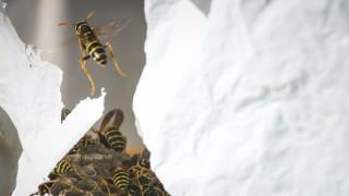 Κρήτη: 27χρονος πέθανε από τσίμπημα σφήκας