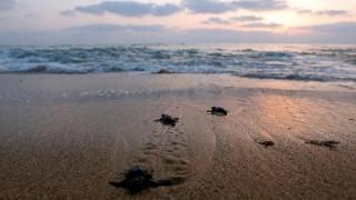 Νεκρές εκατοντάδες χελώνες στην ακτή του Ελ Σαλβαδόρ