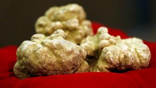 Ιταλία: «Εκτοξεύεται» η τιμή της λευκής τρούφας