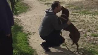 Η συγκινητική επανασύνδεση σκύλου με τον ιδιοκτήτη του μετά από τρία χρόνια (vid)