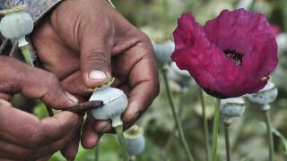 Σε επίπεδα ρεκόρ η παραγωγή οπίου στο Αφγανιστάν