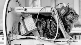 Παρίσι: Μνημείο για την Φελισέτ, την μόνη γάτα που ταξίδεψε στο διάστημα