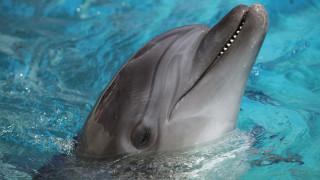 Νεκρό δελφίνι βρέθηκε στη Χαλκιδική