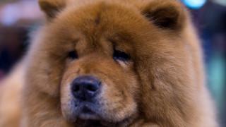 Σκύλος είναι μακριά από το αφεντικό του και «επικοινωνεί» μαζί του με βιντεοκλήση (vid)