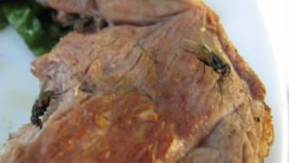 Η επιστήμη προειδοποιεί: Μην καταναλώνετε φαγητό πάνω στο οποίο έχει κάτσει μύγα