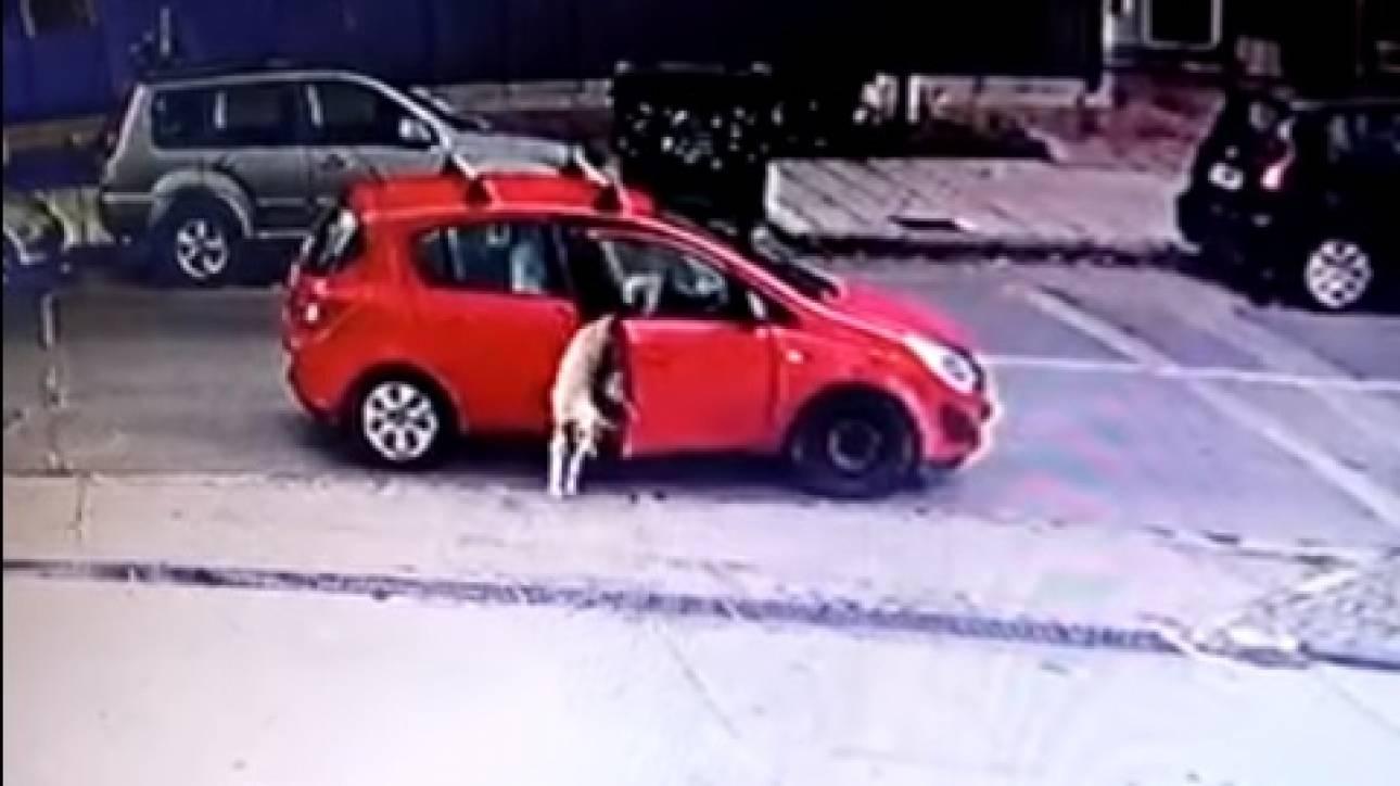 Θεσσαλονίκη: Εγκατέλειψε τον σκύλο της στη μέση του δρόμου (vid)