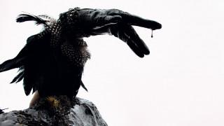 Photo Vogue Festival: κλιματική αλλαγή, εθισμοί & επιδημίες με στιλ στο φεστιβάλ εικόνας