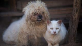 Γιατί οι σκύλοι είναι πιο έξυπνοι από τις γάτες: Οι επιστήμονες δίνουν την εξήγηση