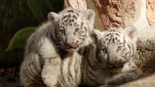 Τα… αξιαγάπητα νέα μέλη ζωολογικού κήπου στο Μεξικό
