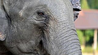Επιχείρηση διάσωσης... ελεφαντίνας σε ζωολογικό κήπο της Γερμανίας (pics)