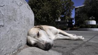 Λάρισα: 75χρονος έσυρε σκύλο με το αγροτικό του σκοτώνοντας τον