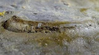 Ανακαλύφθηκε απολίθωμα ίσως του αρχαιότερου ματιού
