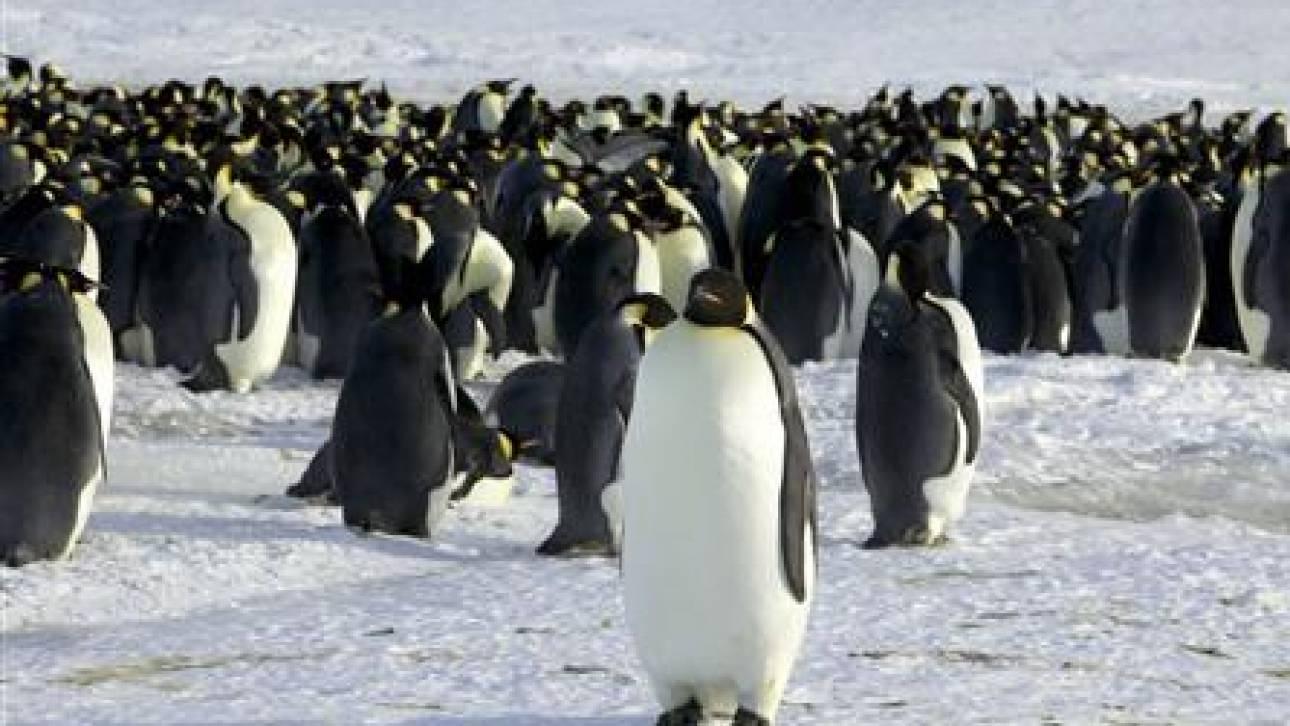 Ο προϊστορικός πιγκουίνος ήταν γίγαντας και τρομακτικός