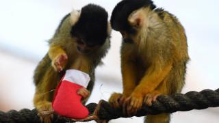 Ο Άγιος Βασίλης «επισκέφτηκε» ζωολογικούς κήπους της Ευρώπης!