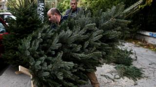 Τα φυτά των Χριστουγέννων και ο συμβολισμός τους