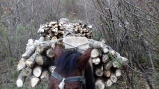 Πήγαν στην Καστοριά με άλογα από την Αλβανία για να κόψουν παράνομα ξύλα