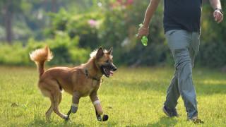 Ταϊλάνδη: Το λυκόσκυλο που δέχτηκε επίθεση με σπαθί απέκτησε προσθετικά πόδια (pics)