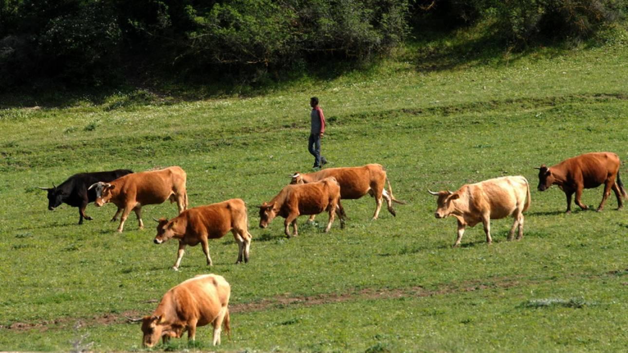Σήμερα οι αποζημιώσεις από τον ΕΛΓΑ σε 1.081 δικαιούχους κτηνοτρόφους